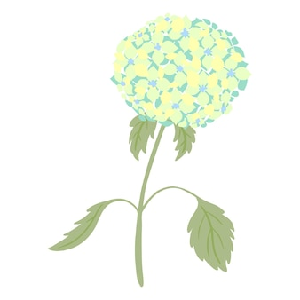 Hortensie mit stiel und blättern auf weißem hintergrund. vintage skizze blaue blume. schöne sommerpflanze im doodle-stil. gestalten sie für jeden zweck. vektor-illustration.