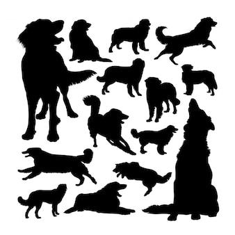 Hovawart hund tier silhouetten