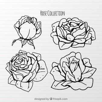 Hübsche sammlung von handgezeichneten rosen