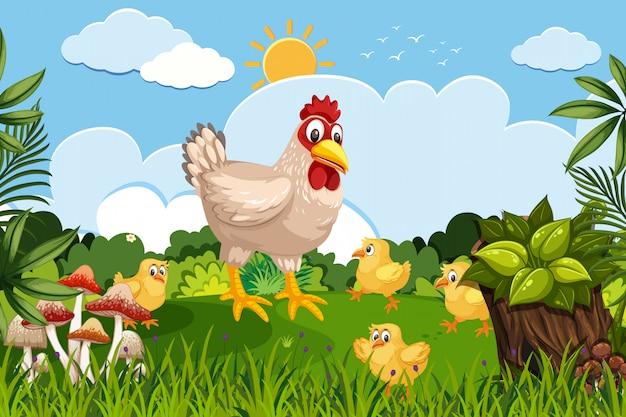 Hühner in der naturszene