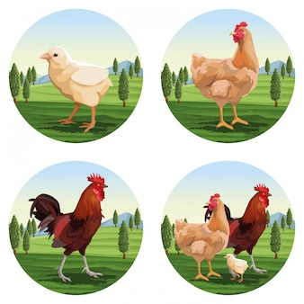 Hühner- und bräterkarikaturen
