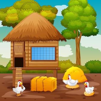 Hühner und hühnerstall auf dem bauernhof