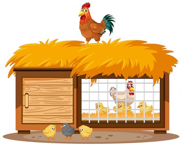 Hühnerstall und hühner auf weißem hintergrund