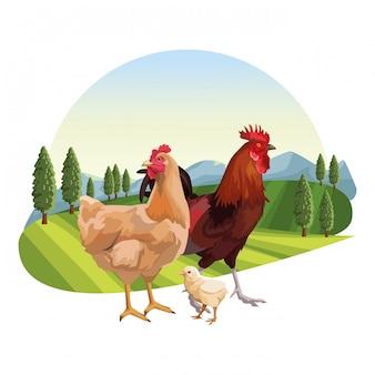 Huhn und bräter