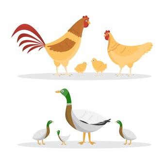 Huhn und enten