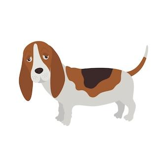 Hund basset hound