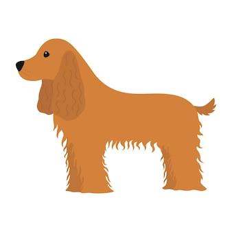 Hund cocker spaniel