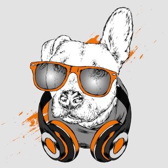 Hund in kopfhörern