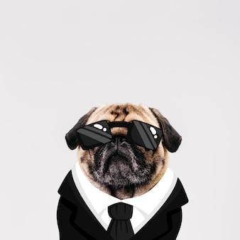 Hund mit gezogenem anzug