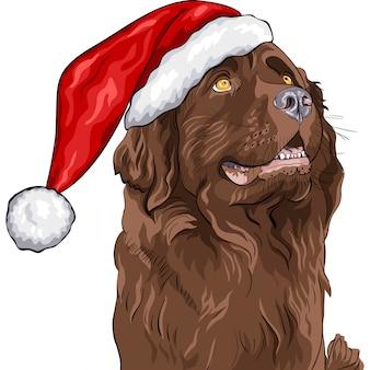 Hund neufundland in einer weihnachtsmütze des weihnachtsmannes