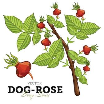 Hund-rose set