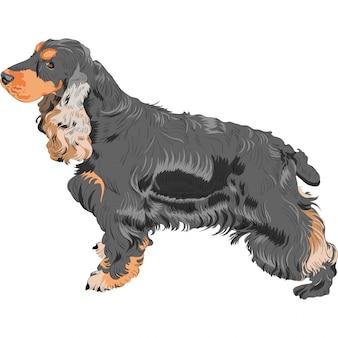 Hund schwarz englisch cocker spaniel rasse