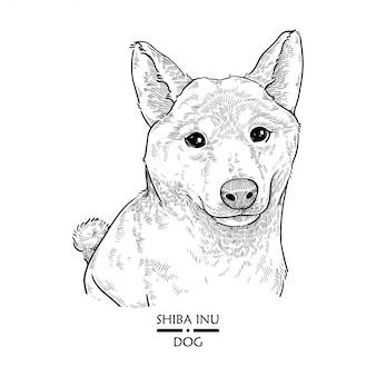 Hund shiba inu, illustrations-vektor