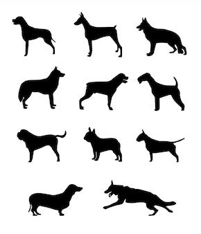 Hund silhouette