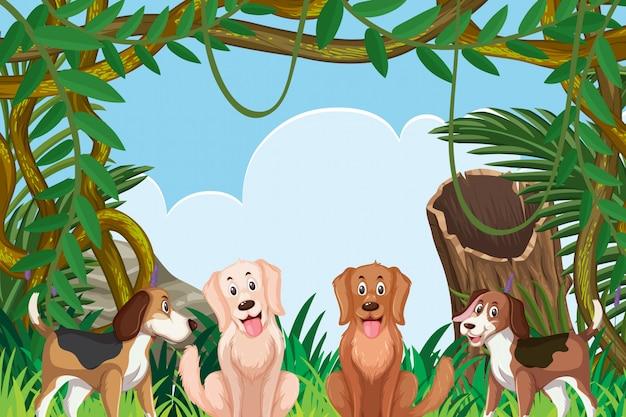 Hunde in der dschungelszene