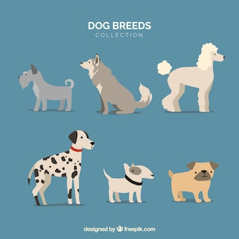 Hunde setzen. sammlung von welpen