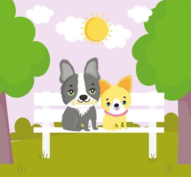 Hunde sitzen auf der bank