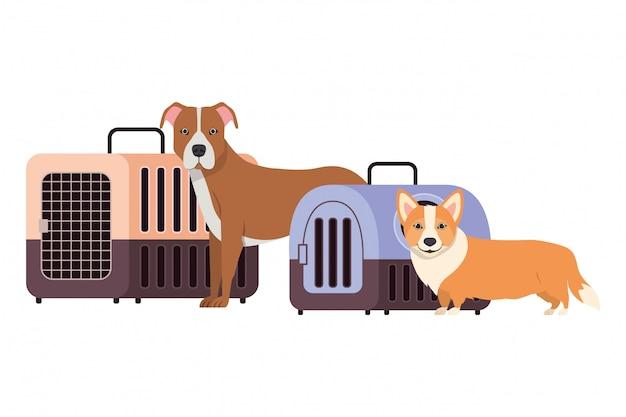 Hunde und haustiertransportkästen auf weiß