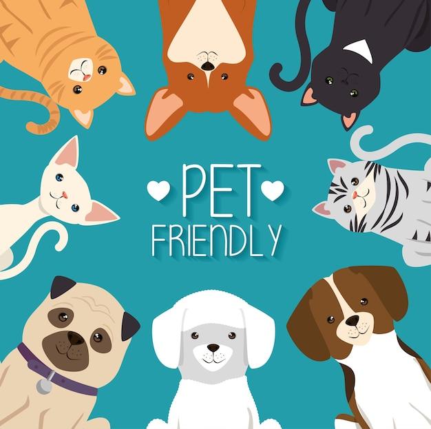 Hunde und katzen haustiere freundlich