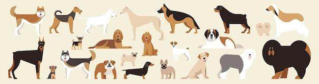 Hunde verschiedener rassen eingestellt. isolierte hunde auf hellem hintergrund. flacher cartoon. illustration. sammlung