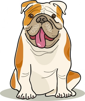 Hunderassen: bulldogge