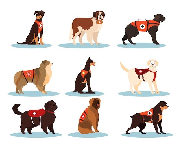 Hunderetter. sammlung der leichenhunde verschiedener rassen zur suche nach menschen. nettes haustier, das leuten hilft. gruppe von tieren.