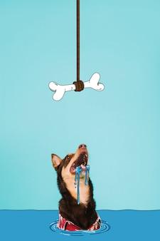 Hungriger hund, der oben einen geschmackvollen knochen schaut
