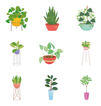 Icon satz zimmerpflanzen