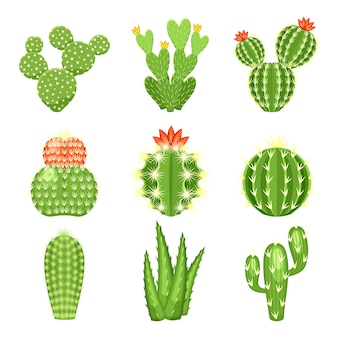 Icon-set von farbigen kakteen und sukkulenten