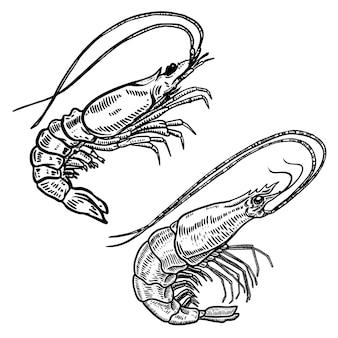 Illustration der garnele im gravurstil.