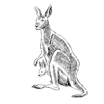 Illustration der hand des kängurus