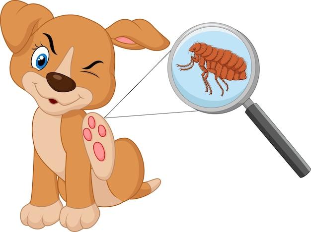 Illustration des flohs befallenen hundes