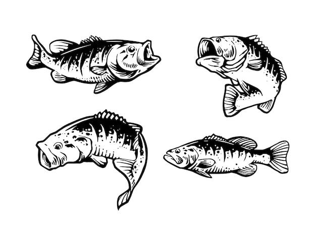Illustration des forellenbarschfisches