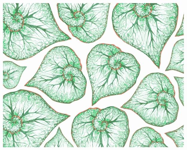 Illustration des frischen grünen begonia leaves-musters