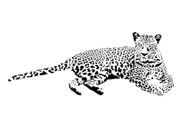Illustration des leoparden