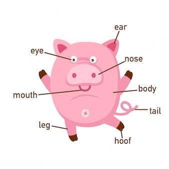 Illustration des schweinvokabularteils des körpers vektor
