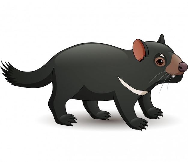 Illustration des tasmanischen teufels lokalisiert auf weißem hintergrund