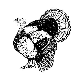 Illustration des truthahns auf weißem hintergrund. thanksgiving-thema. element für plakat, emblem, zeichen, karte ,. illustration