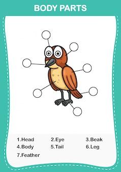 Illustration des vogelvokabularteils des körpers, schreiben sie die korrekten anzahlen der körperteile