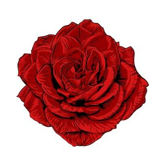 Illustration einer roten rose