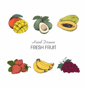 Illustration früchte hand gezeichnete sammlung
