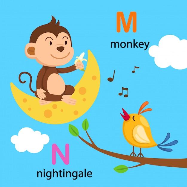Illustration lokalisierter alphabet-buchstabe m-mond, n-nachtigall
