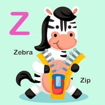 Illustration lokalisierter tieralphabet-buchstabe z-zip, zebra