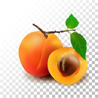Illustration realistische aprikosenfrucht