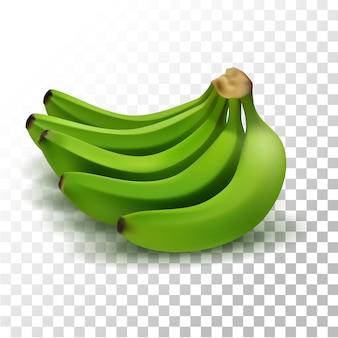 Illustration realistische grüne bananenfrucht