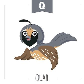 Illustration von alphabetbuchstaben q und von wachteln