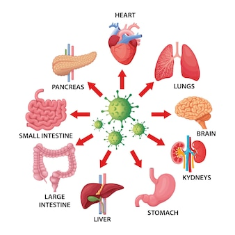 Illustration von covid-19 und menschlichen organen