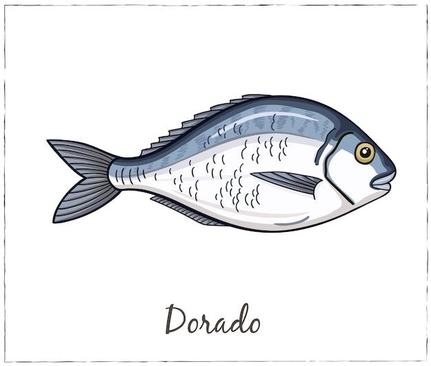 Illustration von dorado fisch für designmenüs