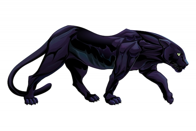 Illustration von einem schwarzen panther vektor isoliert objekt