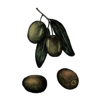 Illustration von frischen oliven auf einer niederlassung